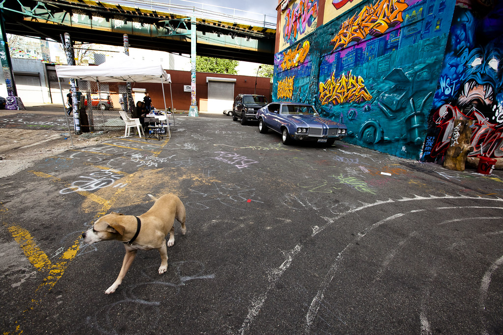 Queens Ny Dog Aoption Good With Cats