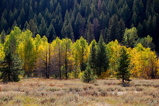 Fall Aspens in Afternoon Light | by Talo66