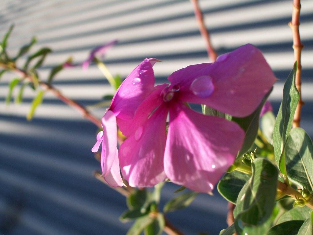 Flowers by Kenzo Mayu O Shea