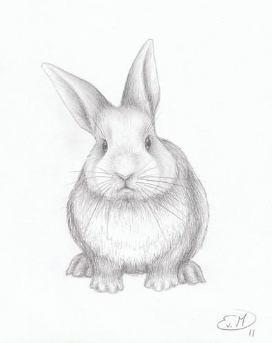 Realistic rabbit illustration - photo#26