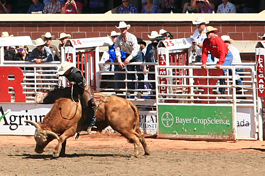 That S A Lot Of Bull One Of My Favorite Events At The