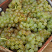 chassellas grapes