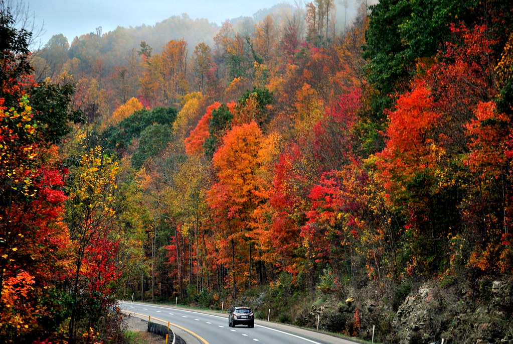 Drive into autumn explore west virginia scene along for West fall