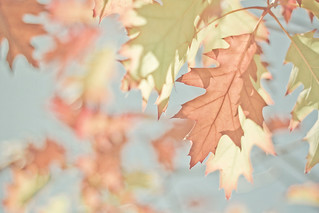 Autumnal Leaves | by JoyHey