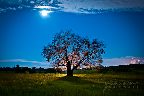 37~P52 Moon Tree | by KW_Daddio