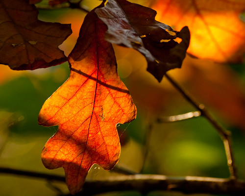 The Autumn Leaves are Turning to the Color of Rust | by Peter E. Lee