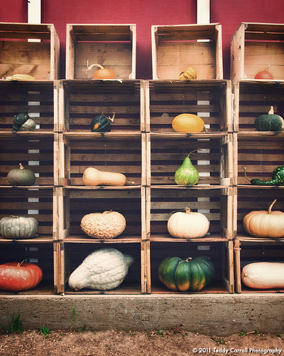 Vintage Squash on Canvas | by Teddy Carroll Photography