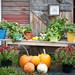 Fall Farmstand