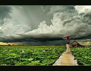 lotus fields and the approaching rain.. | by PNike (Prashanth Naik)