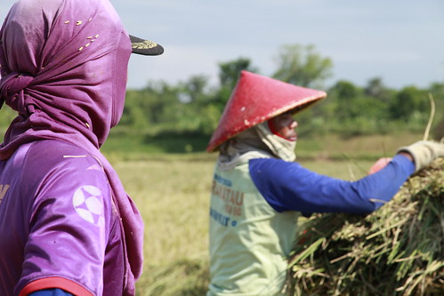 Men wear protective clothing while working in the fields | by IFPRI-IMAGES