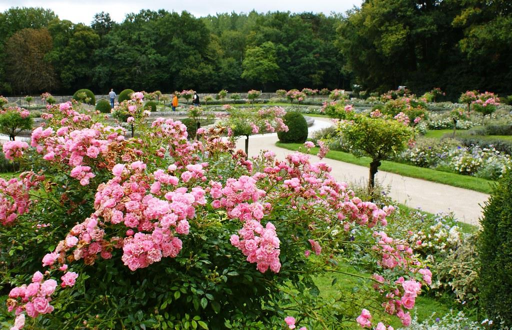 New World - Rose Garden / Ain't Nobody Ever Gonna Wonder Why