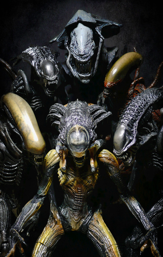 Predalien Queen - DVAVP Wiki