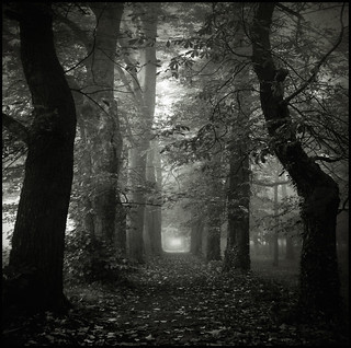 Forest | by Christophe Regnaud