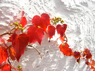 Autumn's best! EXPLORE 451 on 29/09/2011 | by 'cosmicgirl1960' NEW CANON CAMERA