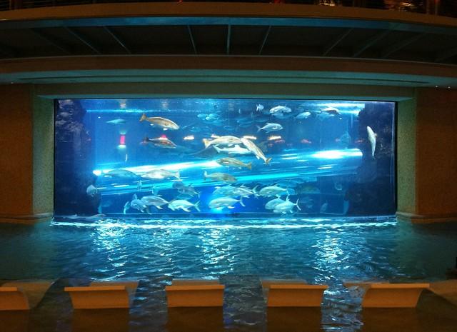 Shark and fish tank at golden nugget flickr photo sharing for Fish tank camera