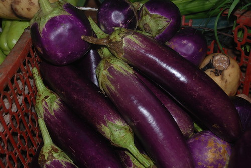 Eggplants | by tuvancong2003