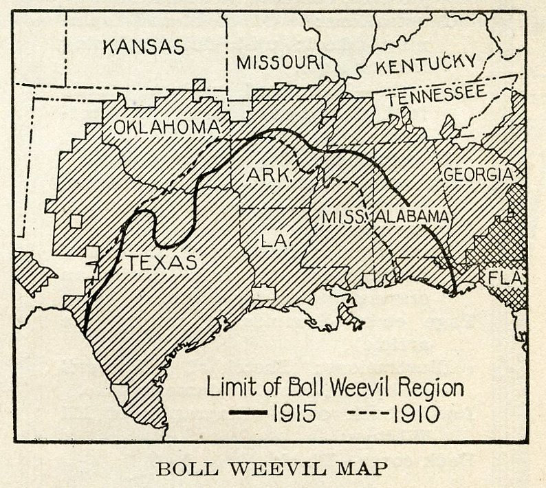 how to get rid of boll weevil