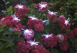 Solar Lichterkette Mit 10 Led Libellen Und Sternen Gartend Flickr