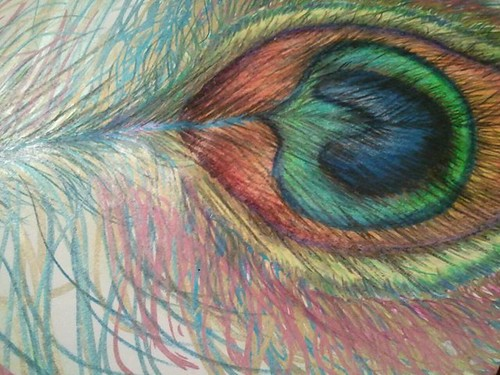 Colored Pencil Feather Colored Pencil Peacock