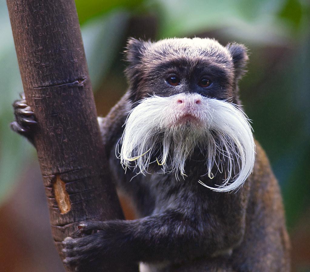 Cute Rainforest Animals Amazing Wallpapers