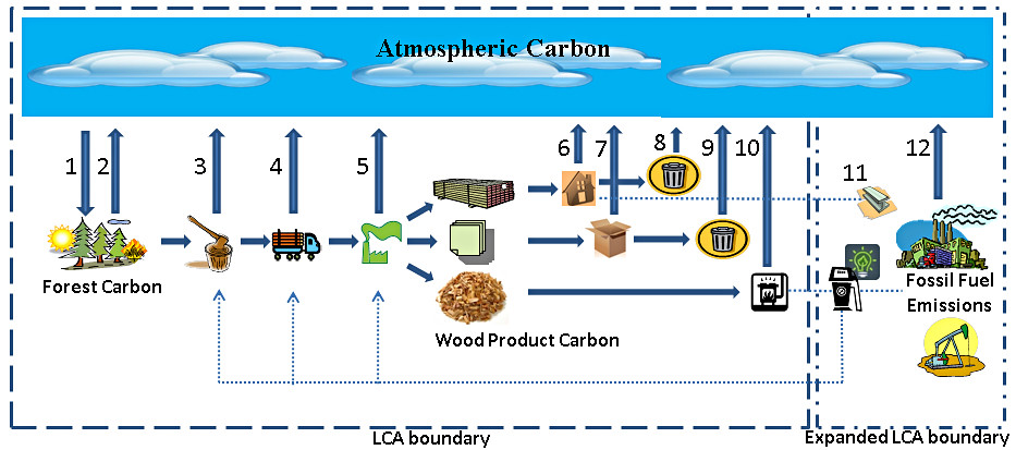 forests and atmospheric carbon