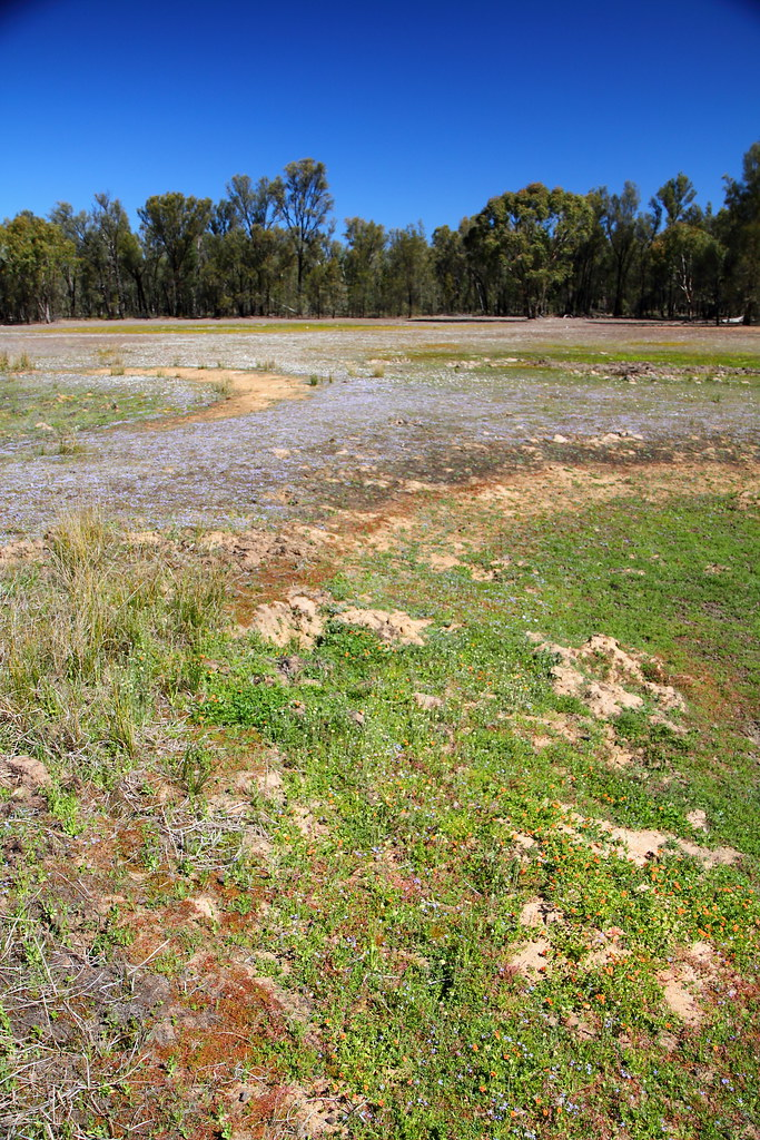 Pilliga Outwash Ephemeral Wetlands Took This Yesterday
