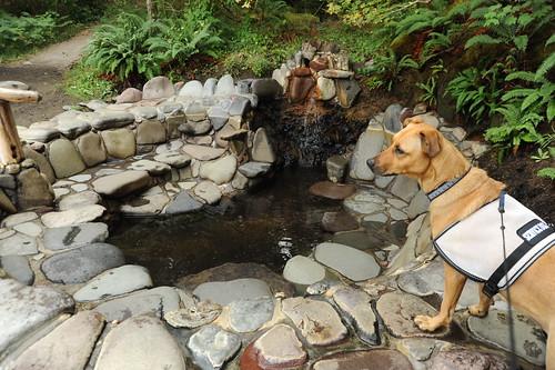 Oregon Service Dog Licens