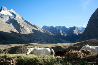 Horses, Zanskar Valley | by Sreejith R Krishnan