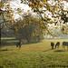 Autumn morning in Donkeyland 3