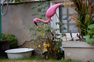 2011-09-09  The ubiquitous pink flamingo is back! | by Mary Wardell