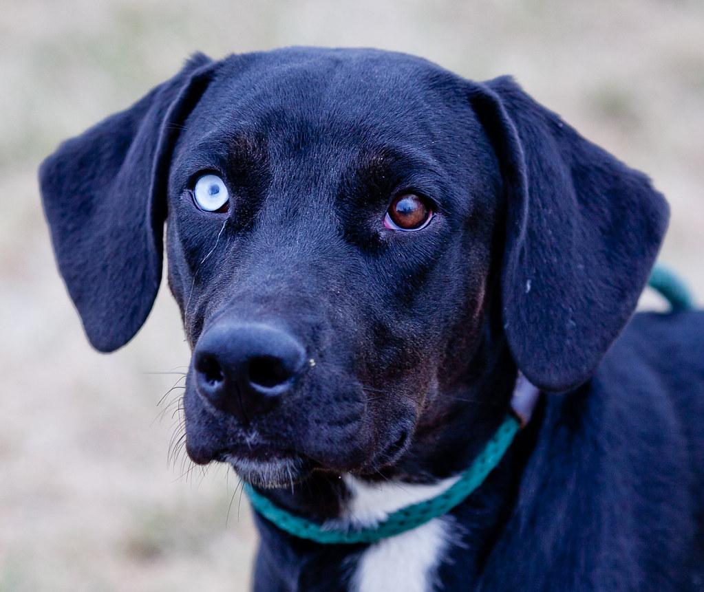 Free Dog Adoption Illinois