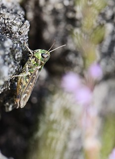 grasshoppers world | by Katharina Becker