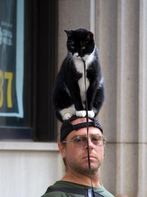 Go Home Cat