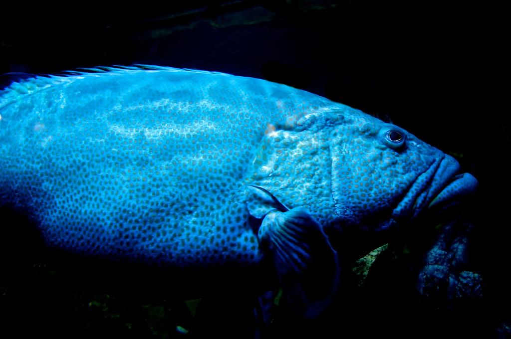 Big Blue Fish A It 39 S My Whole Damn Raison D 39 Etre Flickr