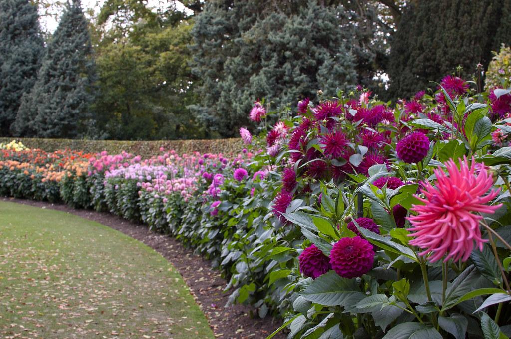 Dahlia Garden Anglesey Abbey Gardens Cambridgeshire Engl