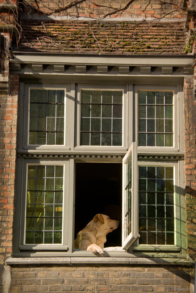 le chien la fen tre bruges belgium 2008 flickr