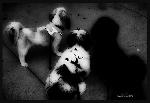 Two Dogs and a Shadow | by rmc sutton