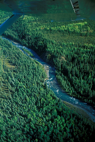 river & forest under wing | by Steven Pinker