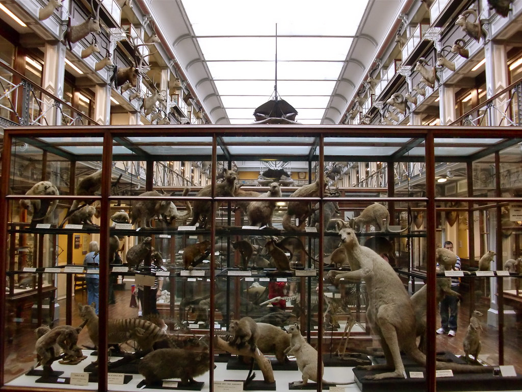 Natural History Museum Dublin Jobs