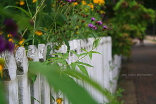 Happy Fence Friday!! | by Erin Stacy