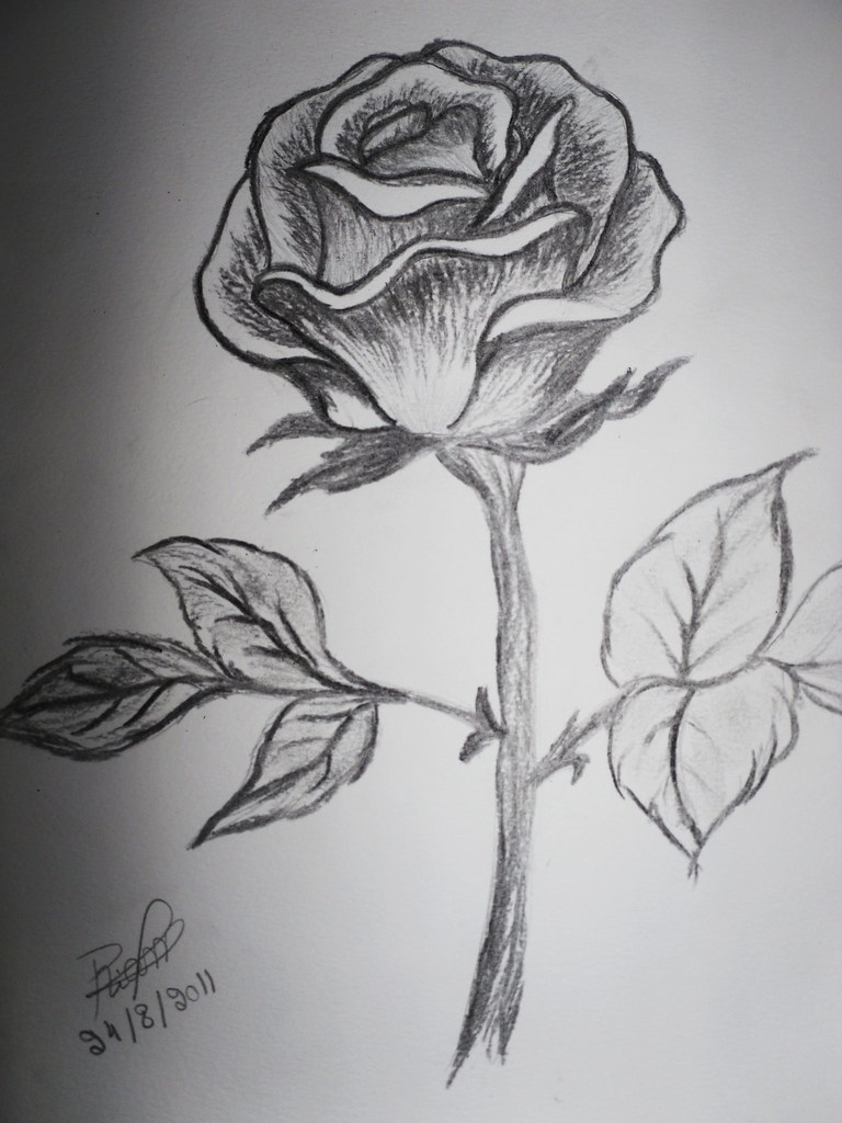 Black And White Rose Riam Bou Ziab Flickr