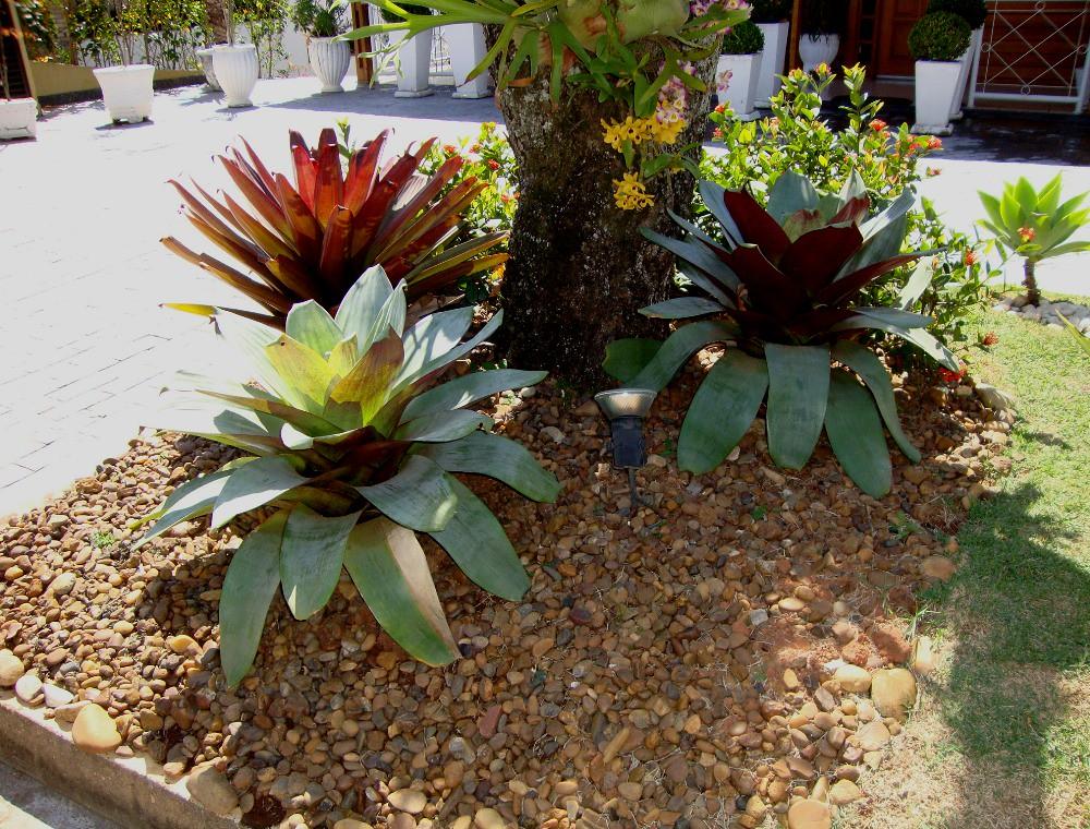 Jardim e pedriscos yvone pereira flickr for Catalogo de flores de jardin