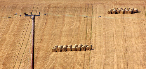 Birds and bales | by snowyturner