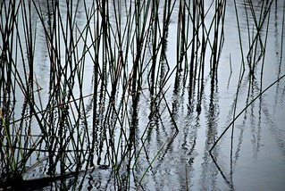 Reeds | by six28fifty