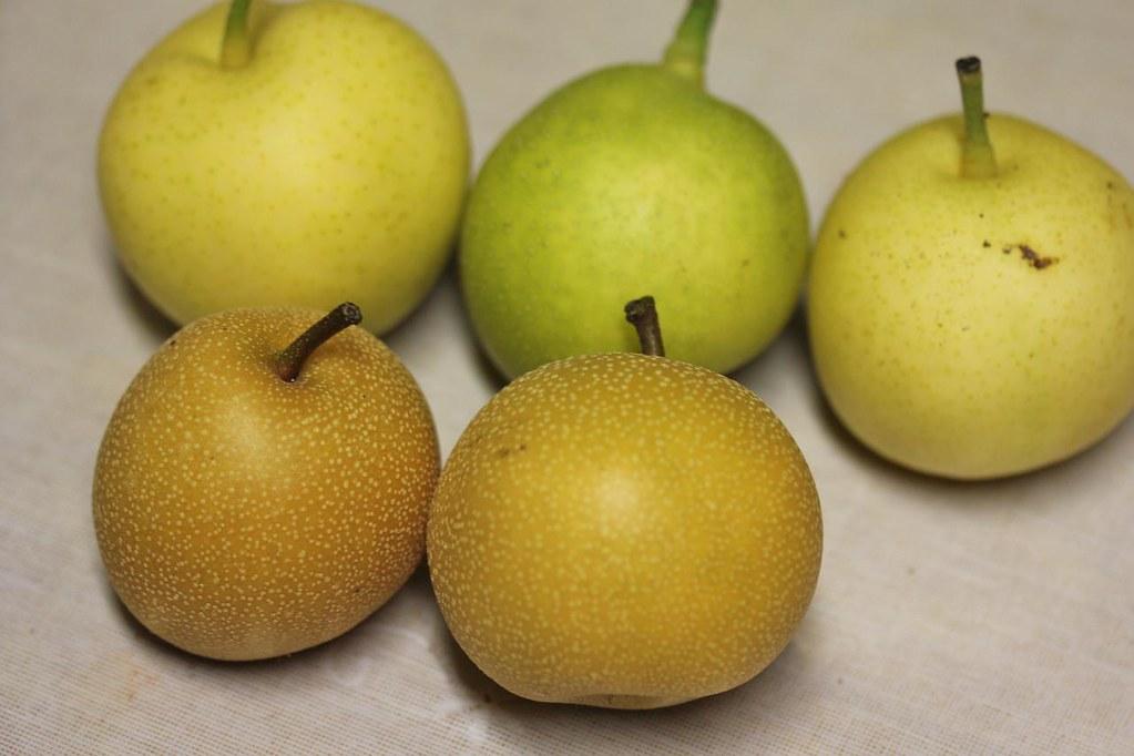 Of pear multiple varieties grafting asian