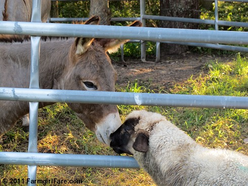 Gus and Finny share a little kiss | by Farmgirl Susan