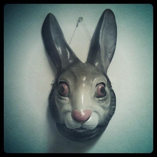 rabbit mask hale j mock flickr