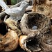 stone bird, bird nests