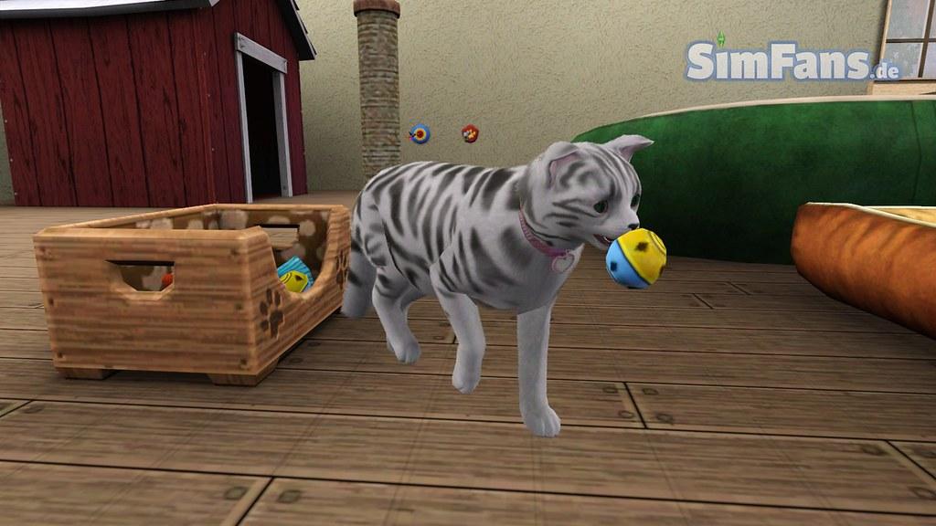 Cat pet store online
