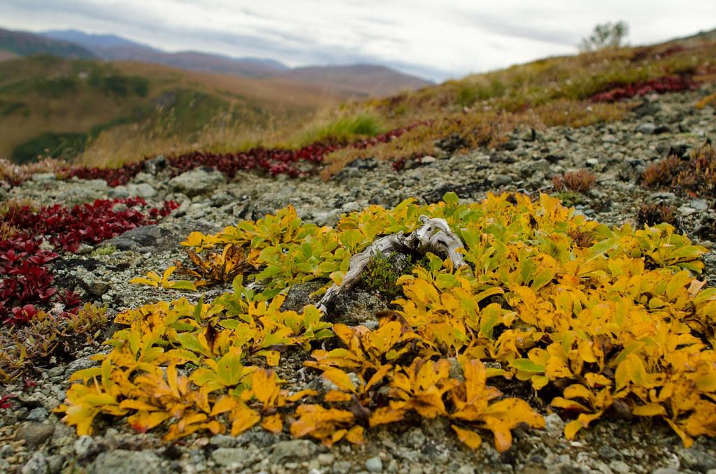 High altitude tundra v...